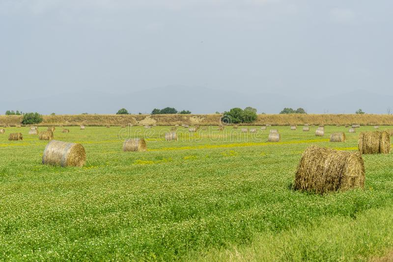 Italy Tuscany Alberese Grosseto, field with hay bales grass and yellow flowers, panoramic view. Tuscany Alberese Grosseto, field with hay bales grass and yellow stock photos