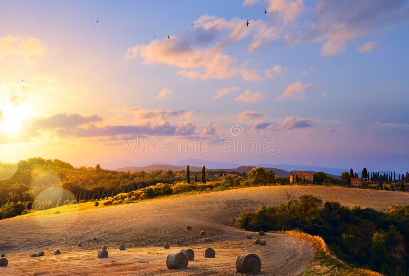 italy tuscany Blå himmel, skog och äng arkivbilder