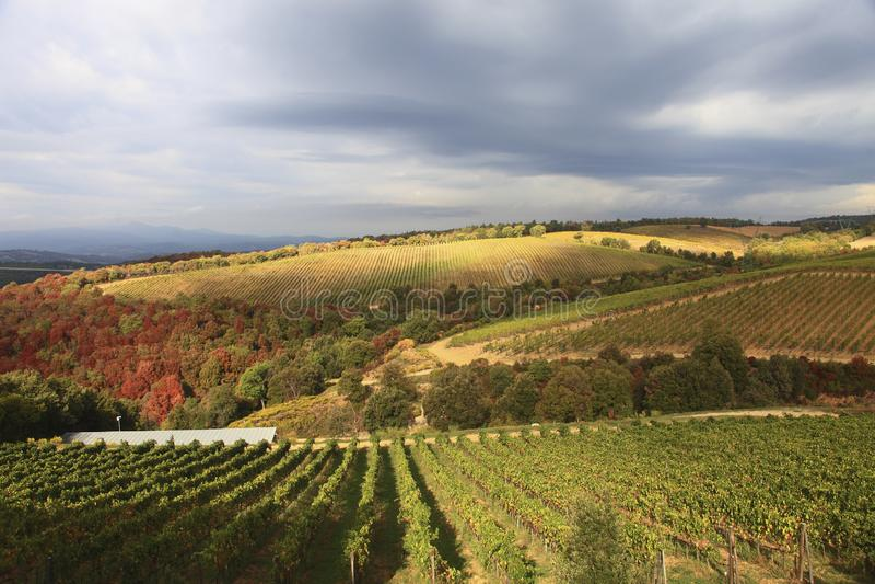 Italy, Tuscany, Campagnatico stock images
