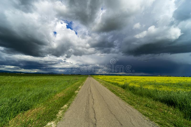 Italy Tuscany Grosseto Maremma rural landscape in bloom, rapeseed fields in flowering hills and pine forest. Tuscany Grosseto Maremma rural landscape in bloom royalty free stock photos