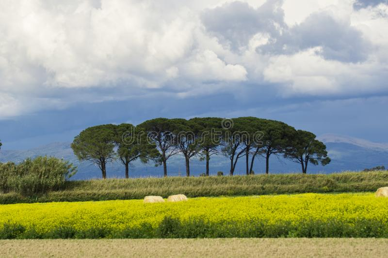 Italy Tuscany Grosseto Maremma rural landscape in bloom, rapeseed fields in flowering hills and pine forest. Tuscany Grosseto Maremma rural landscape in bloom royalty free stock photography