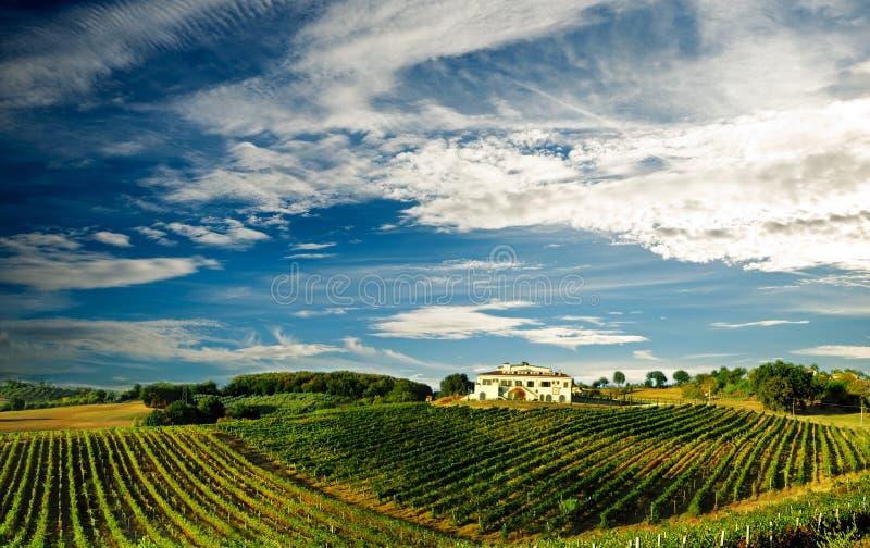 italy vingård royaltyfri bild