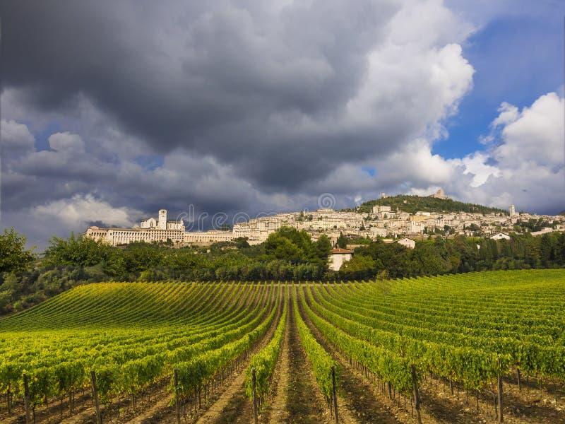italy winnicy Tuscany zdjęcie royalty free