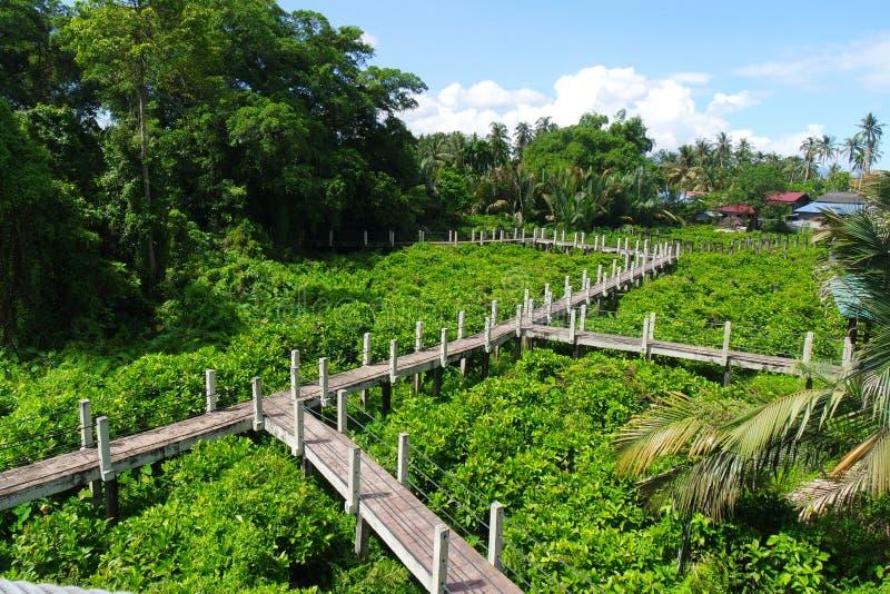Itam d'air de promenade de forêt images libres de droits