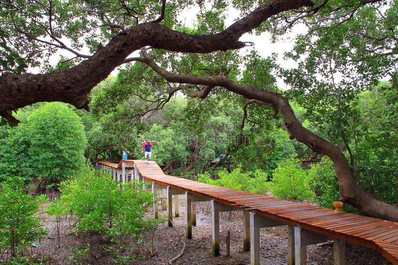 itinéraire à la forêt photos stock