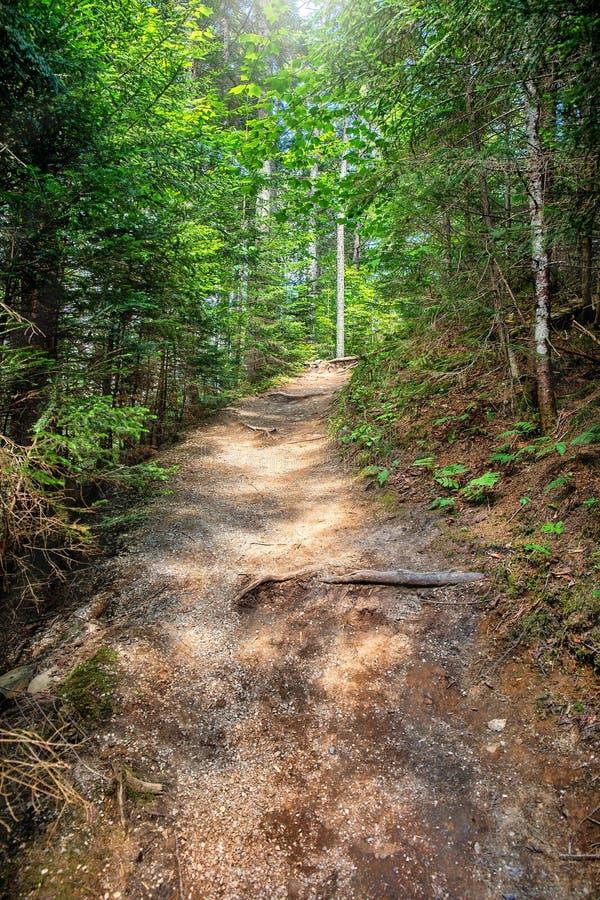 Itinéraire aménagé pour amateurs de la nature dans la forêt image libre de droits