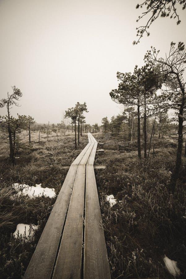 itinéraire aménagé pour amateurs de la nature dans le marais dans la neige profonde en hiver - rétro regard de cru photographie stock