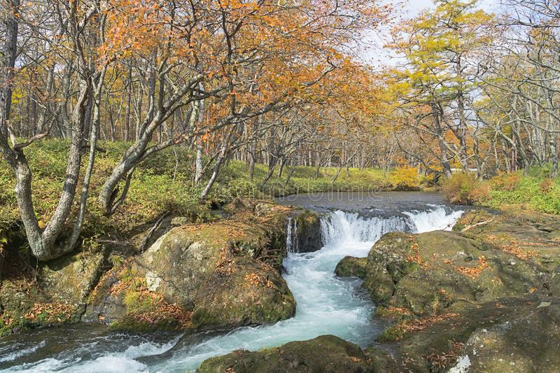 Itinerario in autunno, Giappone di trekking di Nikko fotografia stock libera da diritti