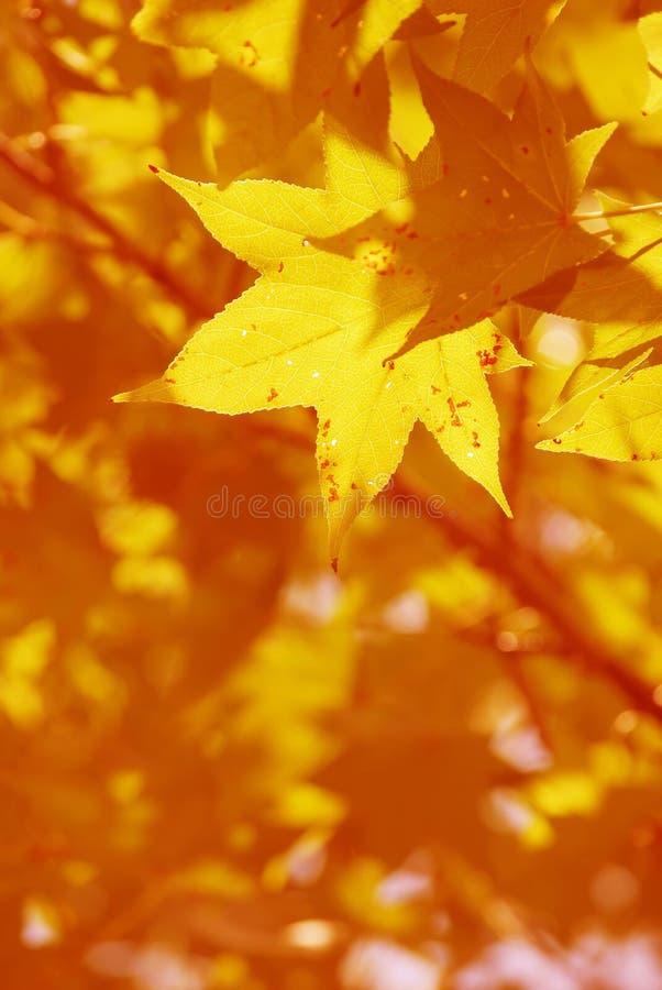 Free Its Fall Stock Photo - 6581880