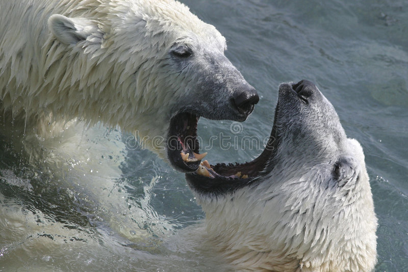 Its mating time again stock photo