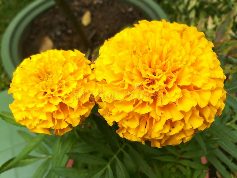 A orange flower royalty free stock images