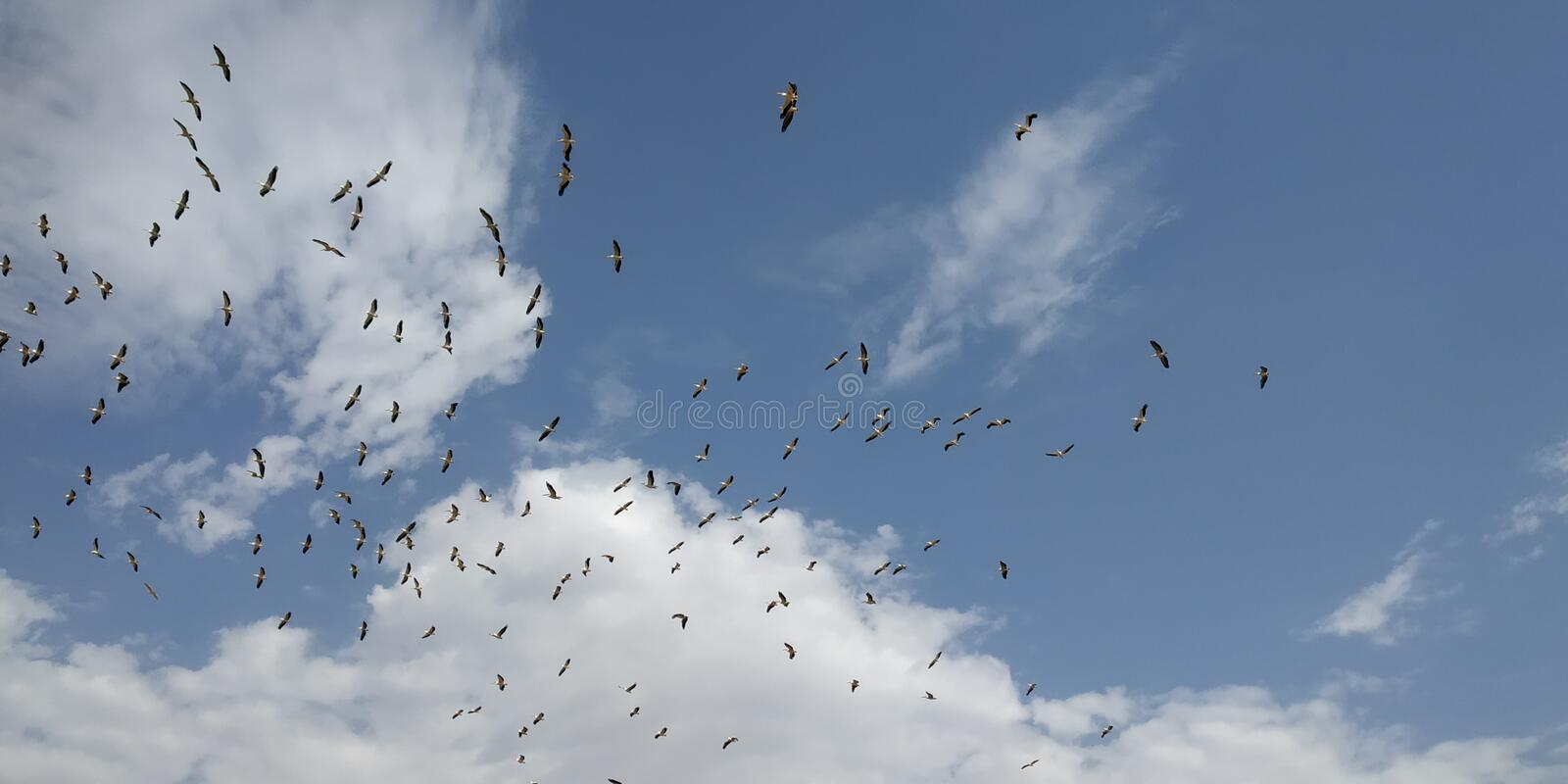 Its shows the beauti of bird with sku. The bird fill free in the sky and enjoy the life stock photo