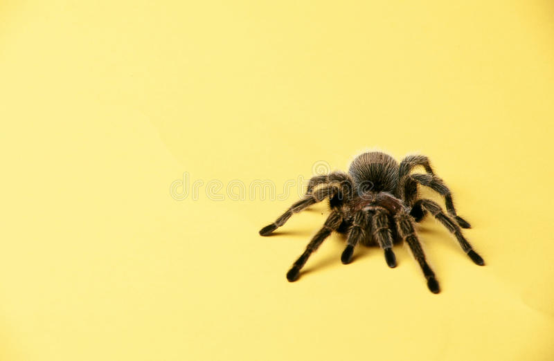 Itsy Spider Royalty Free Stock Images