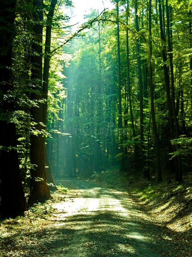 iv de forêt images stock