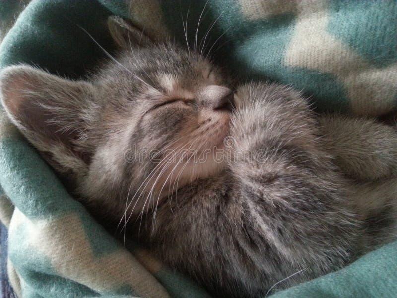 IV il gattino fotografia stock
