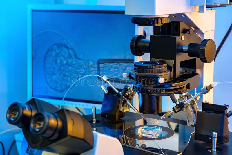 IVF-mikroskop royaltyfria bilder