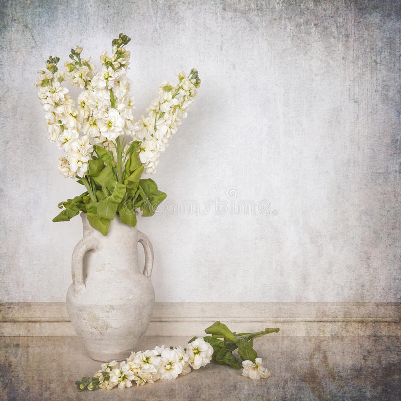 Ivory stocks. A vase of ivory stocks over white background. Textured to look like an aged photo stock image