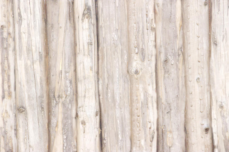 Ivory wood texture. Background dark old wooden panels stock image