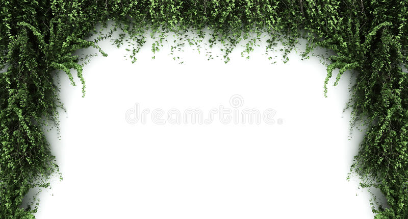 Ivy frame royalty free stock images