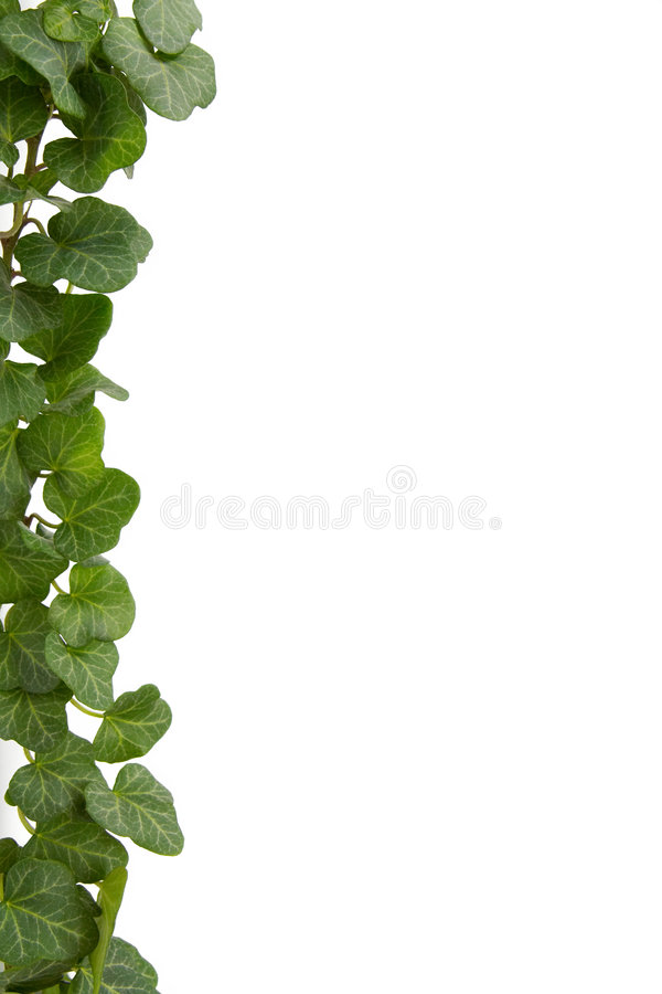 Free Ivy Stock Photos - 3609483