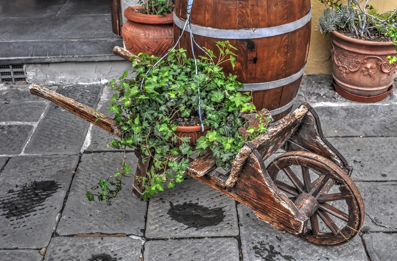 Ivy on a cart stock photo
