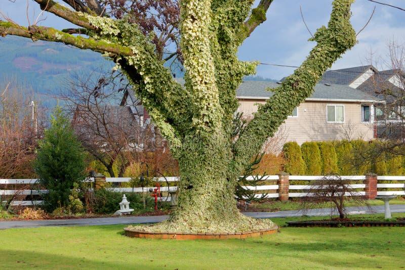 Ivy Cover in de Winter stock foto's