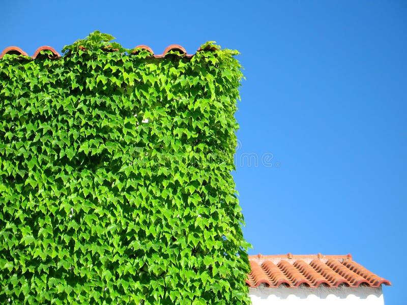 Ivy-Covered Gebäude-Detail stockfotos