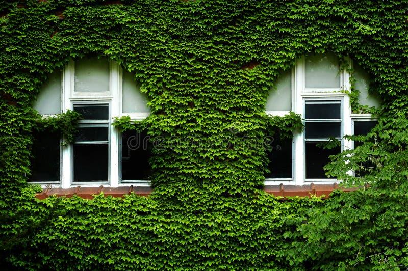 Ivy Covered Windows Lush Green royalty-vrije stock fotografie