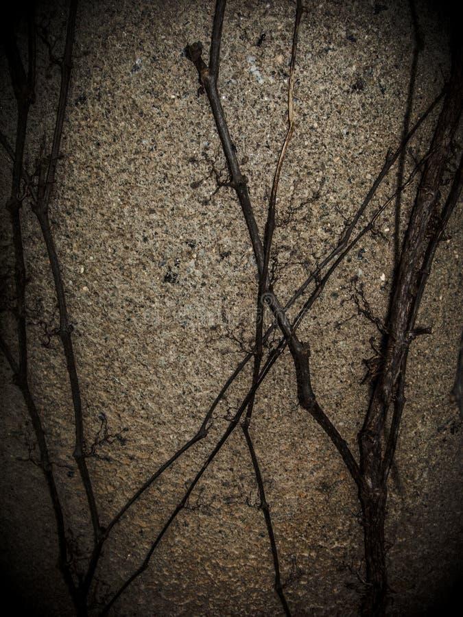 Ivy Creeps encima del lado del pozo viejo imagen de archivo
