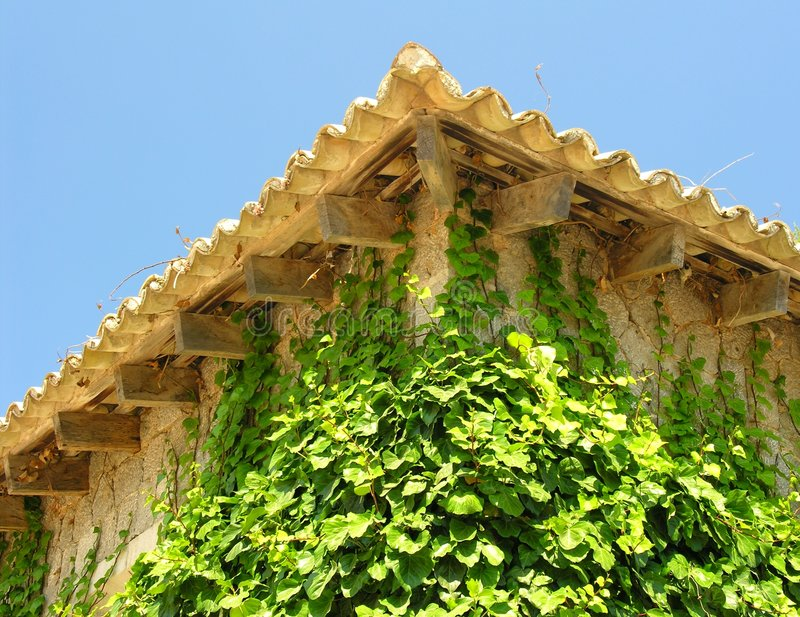 Download Ivy Facade stock image. Image of blue, nature, europe, sill - 171591