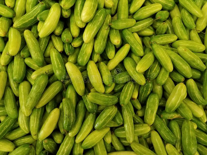 Ivy gourd royalty free stock photos