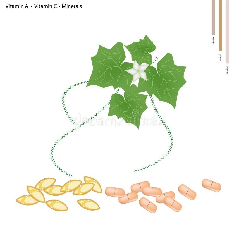 Ivy Gourd Leaves mit Vitamin A und C stock abbildung
