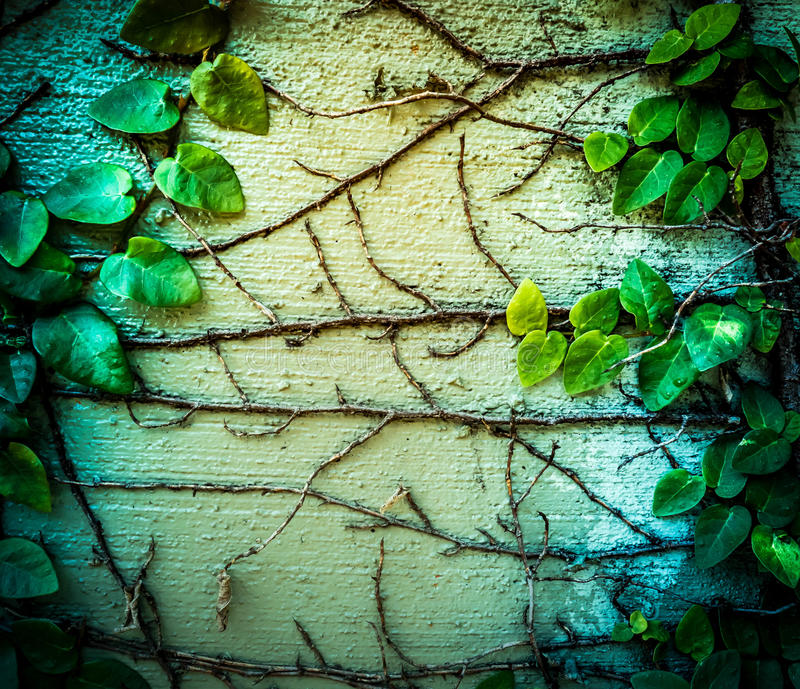 Ivy grow up on the wall royalty free stock photos