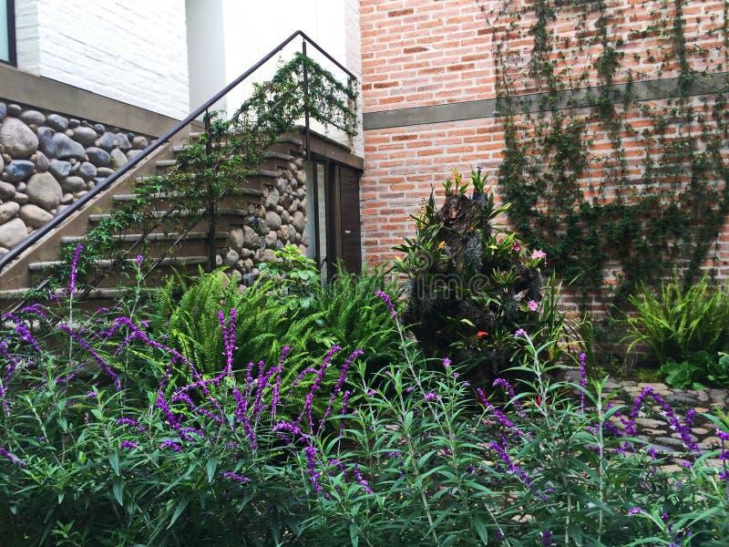 Ivy Growing encima de la pared y de las escaleras con las flores púrpuras imagenes de archivo