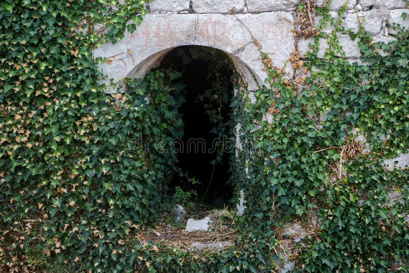 Ivy growing on an old tunnel royalty free stock photography