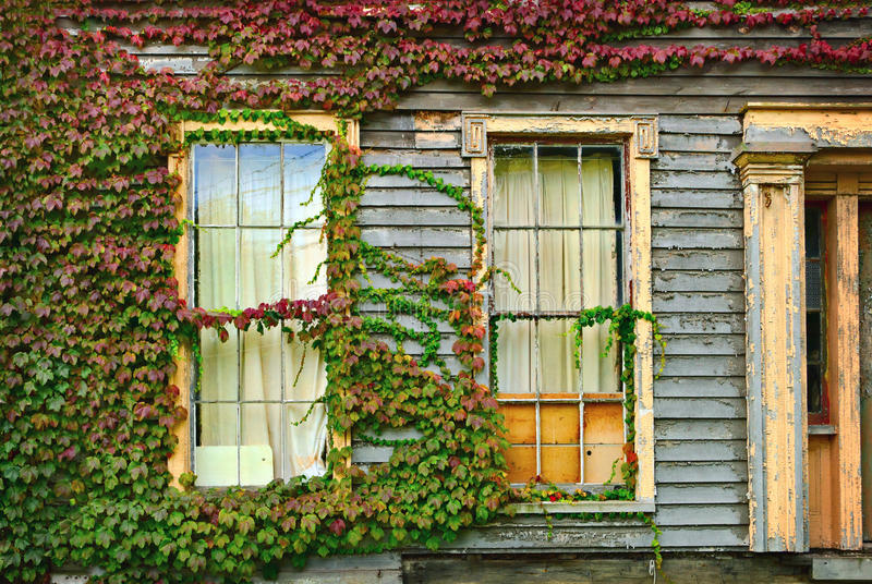 Ivy On House Stock Photography