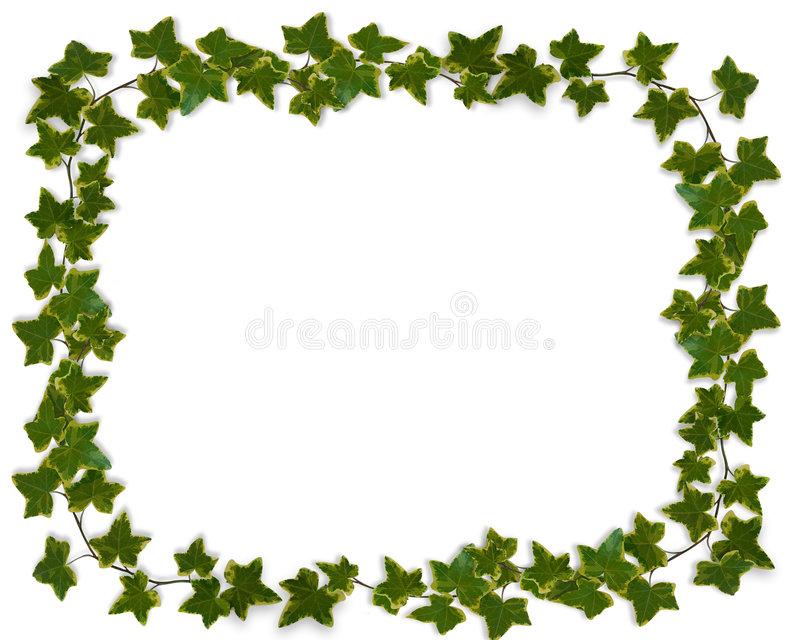 Ivy leaves Border vector illustration