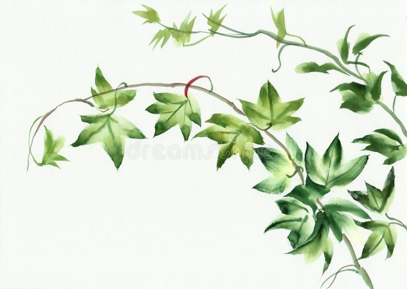 Ivy leaves vector illustration