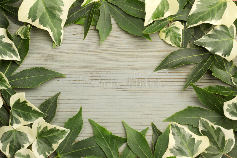 Ivy and maple leaves. On aged wood background stock images