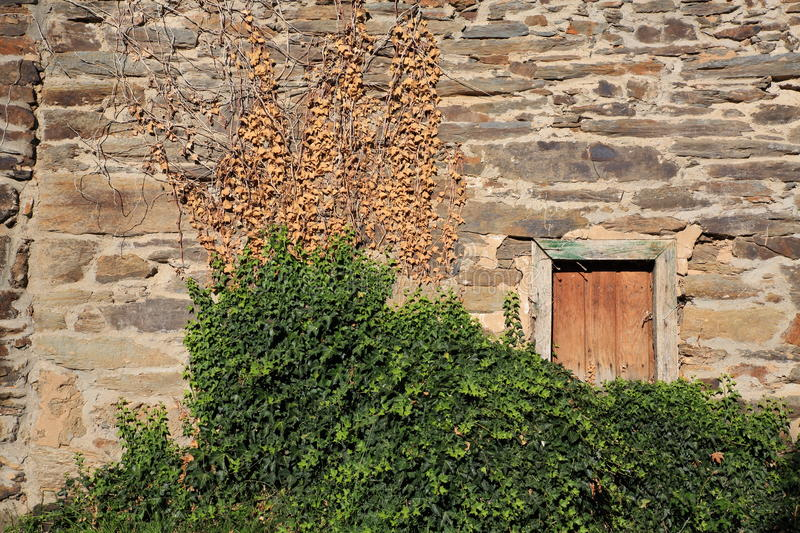 Download Ivy Over Stone Wall Royalty Free Stock Images - Image: 26091939