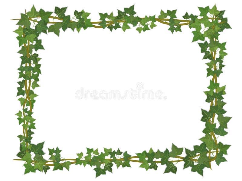 Ivy square frame vector illustration