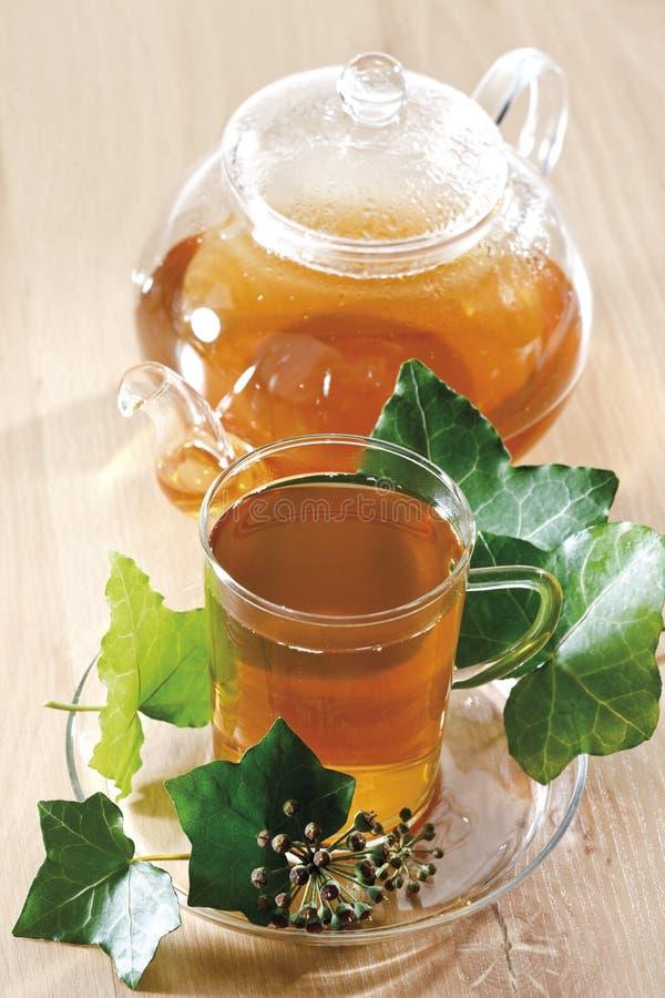 Ivy Tea (hedera helix) immagini stock