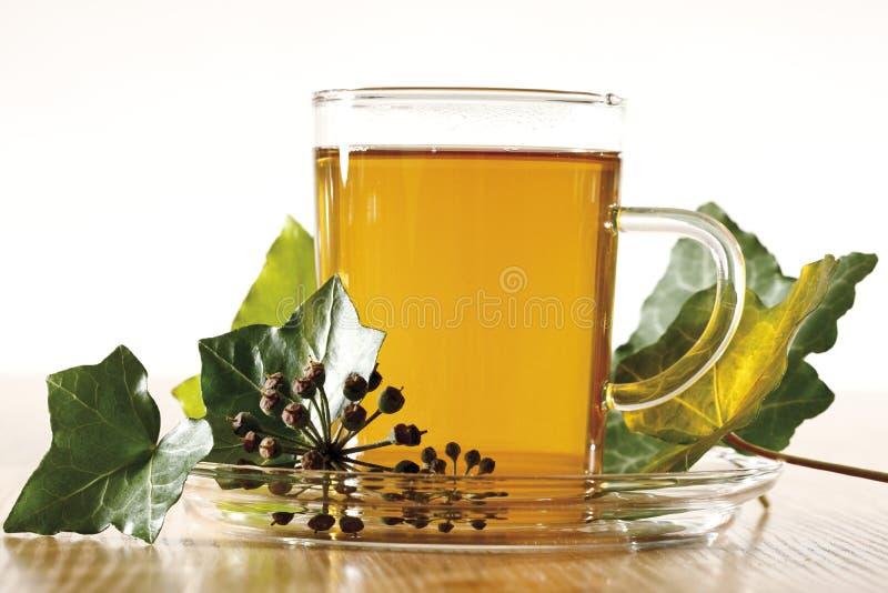 Ivy Tea (hedera helix) fotografia stock libera da diritti