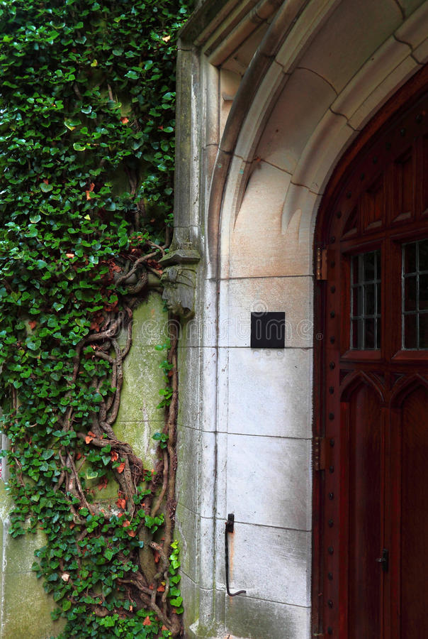 Ivy Vines by Door Entrance stock images