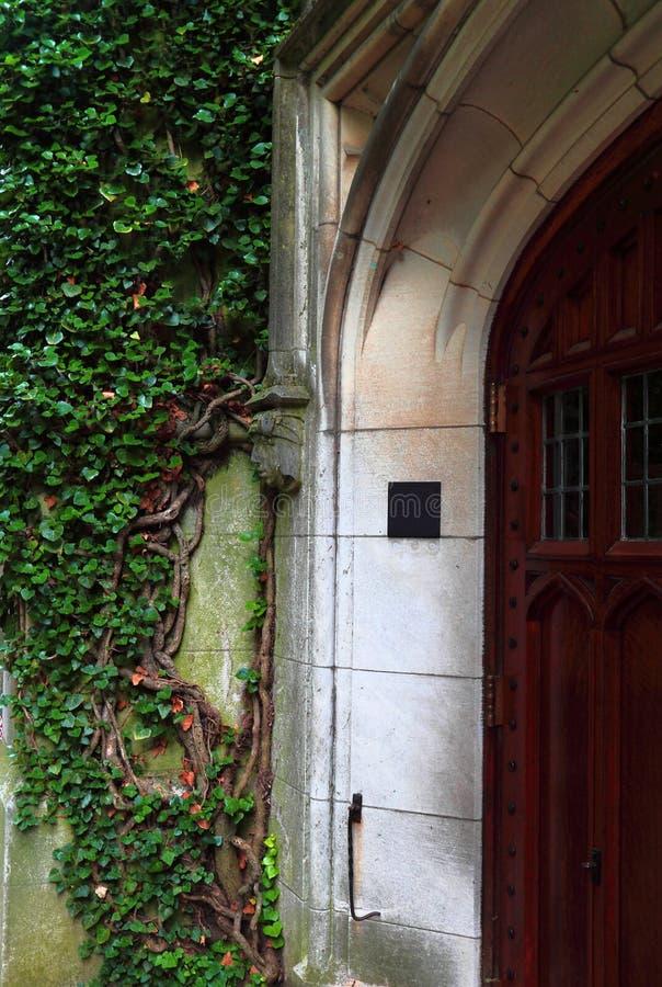 Ivy Vines tramite l'entrata della porta immagini stock