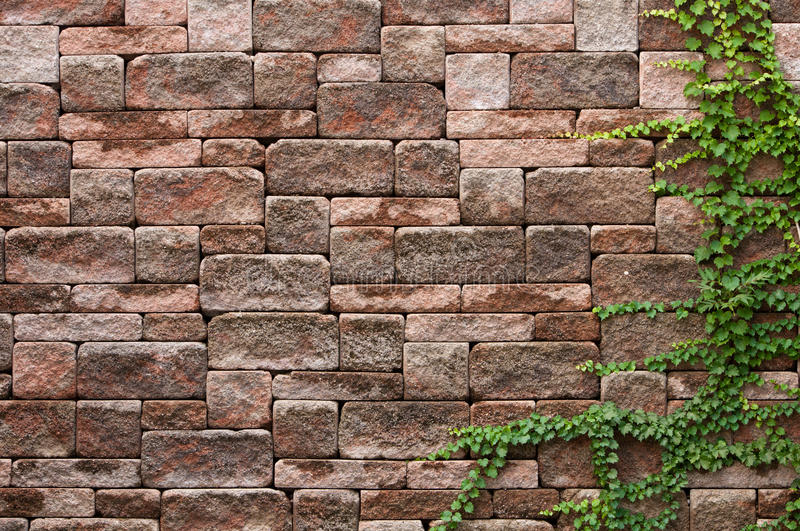Download Ivy on a wall stock photo. Image of wall, background - 26870610