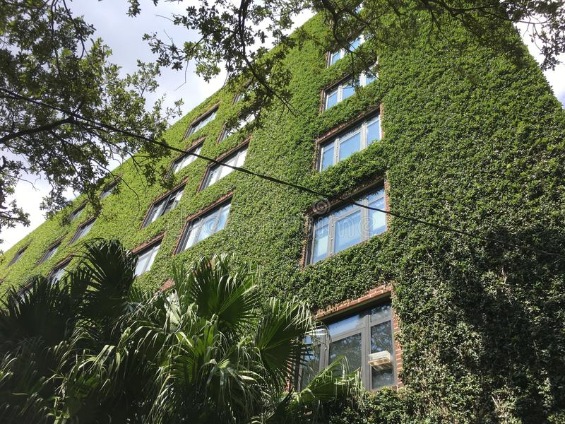 Download Ivy Walls On A Tall Brick Apartment Building Stock Image   Image  Of Blue,