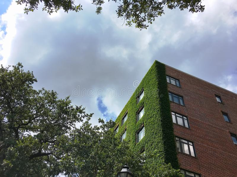 Download Ivy Walls On A Tall Brick Apartment Building Stock Photo   Image  Of Energy,