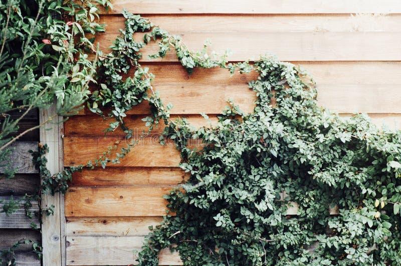 Ivy On Wood Fence Free Public Domain Cc0 Image