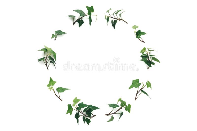 Ivy Wreath On White Background royalty free stock images
